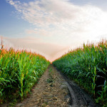 6 Questions To Help Plan Your 2015 Corn Strategy