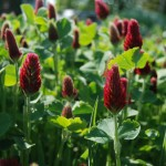 Improving Soil Quality & Cover Crops