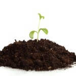 Managing Disease by Managing Soils