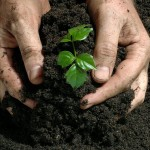 Fall fertilizer and liming tips to save your investment