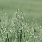 Fertilizing Forages: Using Nutrients Wisely
