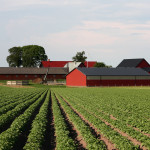 Farm diversification decision-making