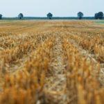 Choosing a Grain Storage System
