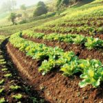 The Role of Smart Farming in Developing Sustainable Agriculture