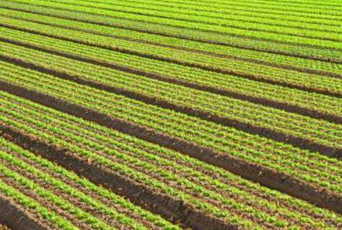 Advantages and Disadvantages of Intensive Farming