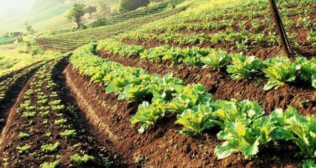 https://en.wikipedia.org/wiki/Sustainable_agriculture#:~:text=Sustainable%20agriculture%20is%20farming%20in,an%20understanding%20of%20ecosystem%20services.